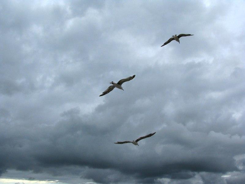 Скачать песня в небе птица в окнах лица