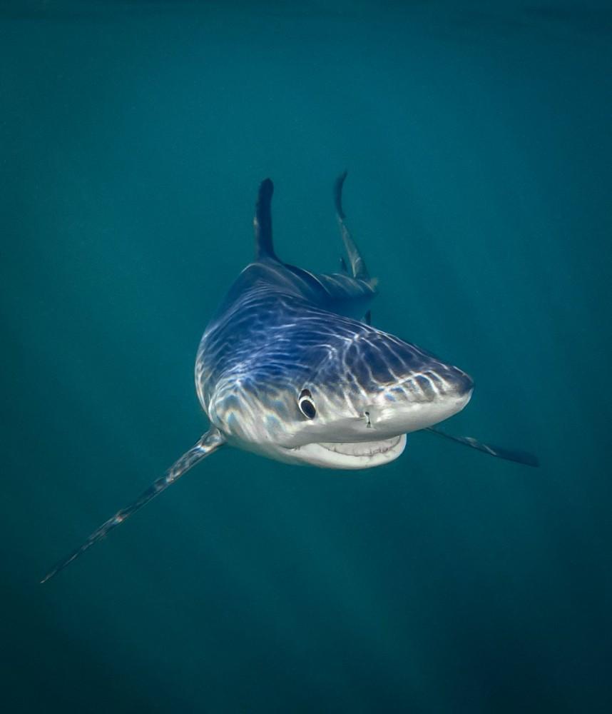 Картинки прикольная акула